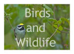 Birds and Wildlife Picture Gallery