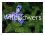 Wildflowers 1, 2, 3 Picture Gallery