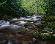 Middle Prong, Little River, Great Smoky Mountains National Park, Tennessee