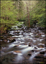 Little Pigeon River, Greenbrier, Great Smoky Mountains National Park, Tennessee