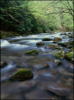 Middle Prong Little River, Great Smoky Mountains National Park, Tennessee