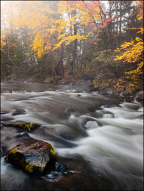 Yellow maples and rapids downstream from Bond Falls, Upper Michigan