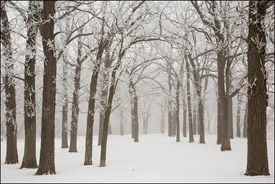 Hoar frost and fog in Winter, Oshkosh, Wisconsin